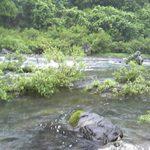 高知県 梼原川(四万十川水系)