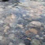 長野県 松川