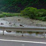 山形県 五十川(いらがわ)
